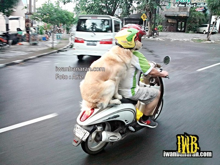 dog_helmet (1)